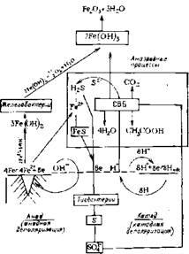 Взаимосвязь кoppoзионно-агpeccивных микроорганизмов в процессе коррозии сталей